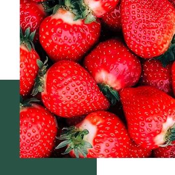 Quiz - profil - fruité et élegant