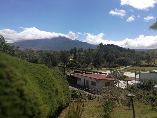 Visiter les plantations de café 4