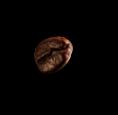 bean_single_up