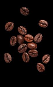 beans_composition